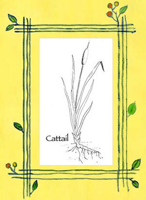 cattaile